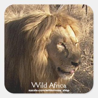 AFRICAN LION Big Five Cat Wildlife Mousepad Square Sticker