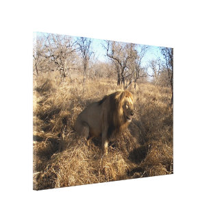AFRICAN LION Big Five Cat Wildlife Photo Print Gallery Wrap Canvas
