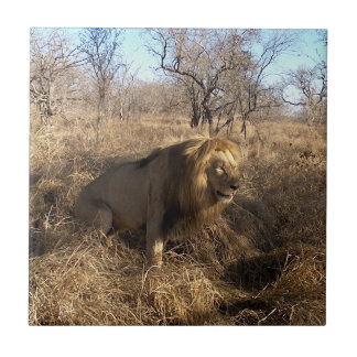 AFRICAN LION Big Five Cat Wildlife Photo Tile
