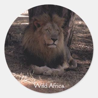 AFRICAN LION Big Five Cat Wildlife Stickers