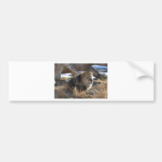 African Lion Bumper Sticker