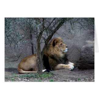 african lion by tree card