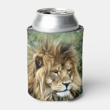 African Lion Can Cooler by Artnmore at Zazzle