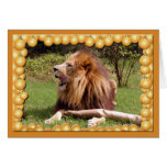 African Lion Christmas Greeting Card