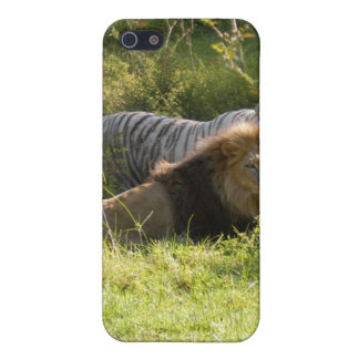 African Lion i Case For iPhone 5