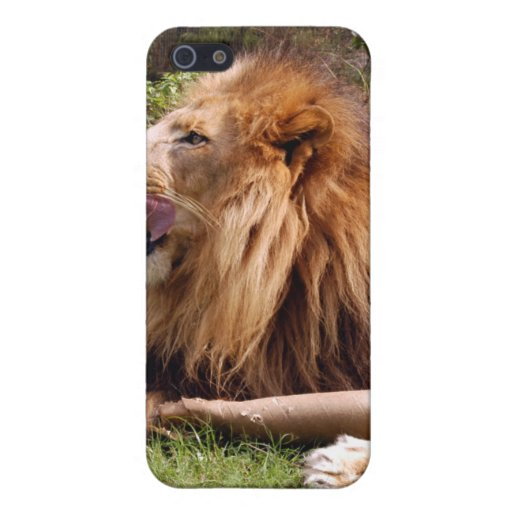 African Lion i Cases For iPhone 5