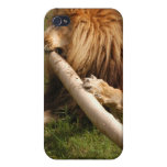 African Lion i Cover For iPhone 4