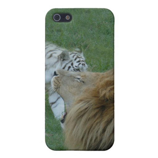 African Lion i Cover For iPhone 5