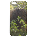 African Lion i Cover For iPhone 5C