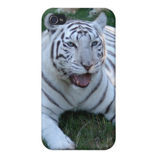 African Lion i iPhone 4 Cases