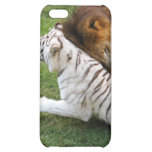 African Lion i iPhone 5C Covers