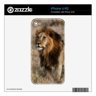 African Lion in Grass iPhone 4S Skin