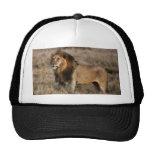 African Lion in Grass Trucker Hat