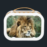 """African lion lunch box<br><div class=""""desc"""">Male African lion lying in weeds looking photo</div>"""