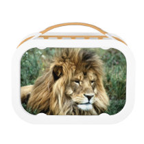 African lion lunch box