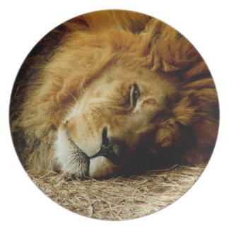 African Lion Melamine Plate