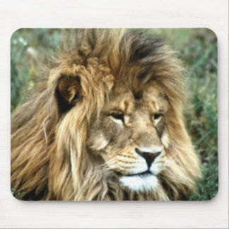 African lion mouse pad