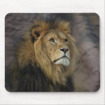 African Lion Mouse Pads
