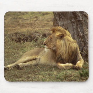 African Lion Mousepad