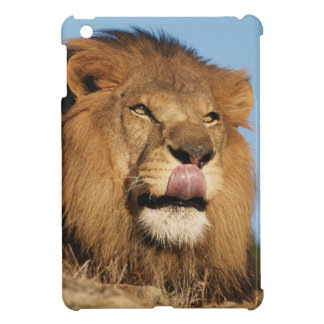 African Lion (Panthera Leo), African savannah Cover For The iPad Mini