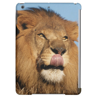 African Lion (Panthera Leo), African savannah iPad Air Cover