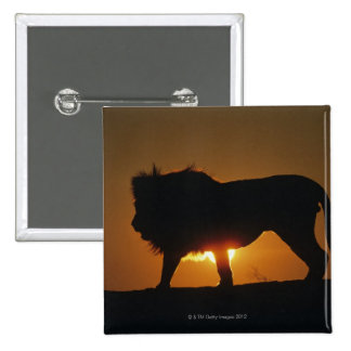 African lion (Panthera leo) against sunset, 2 Inch Square Button