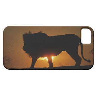African lion (Panthera leo) against sunset, iPhone SE/5/5s Case