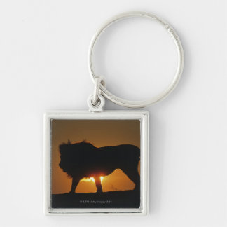 African lion (Panthera leo) against sunset, Keychain