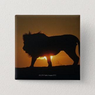 African lion (Panthera leo) against sunset, Pinback Button