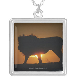 African lion (Panthera leo) against sunset, Silver Plated Necklace