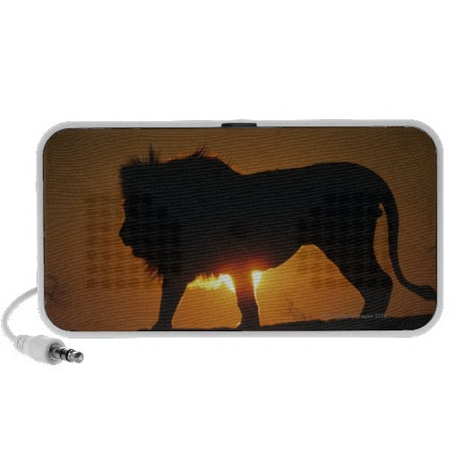 African lion (Panthera leo) against sunset, Speaker