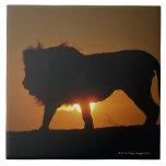 African lion (Panthera leo) against sunset, Ceramic Tile