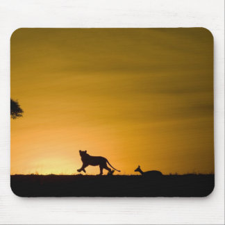 African Lion, Panthera leo, chasing gazelle Mouse Pad