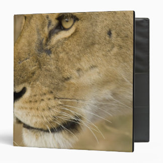African Lion, Panthera leo, close up portrait 3 Ring Binders