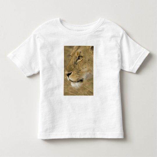 African Lion, Panthera leo, close up portrait Toddler T-shirt