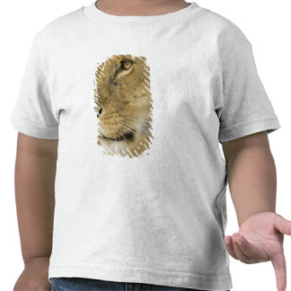 African Lion, Panthera leo, close up portrait Tshirt