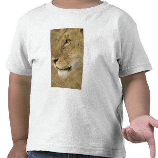 African Lion, Panthera leo, close up portrait T-shirts