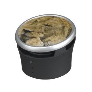 African Lion, Panthera leo, laying down asleep Bluetooth Speaker