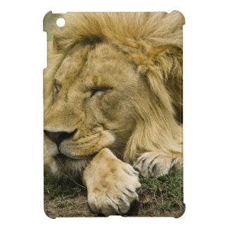 African Lion, Panthera leo, laying down asleep Cover For The iPad Mini