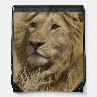 African Lion, Panthera leo, Portrait of a Drawstring Bag
