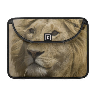 African Lion, Panthera leo, Portrait of a MacBook Pro Sleeves
