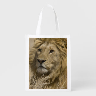 African Lion, Panthera leo, Portrait of a Market Tote