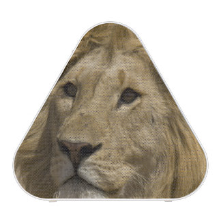 African Lion, Panthera leo, Portrait of a Speaker