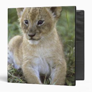 African lion, Panthera leo), Tanzania, Vinyl Binder