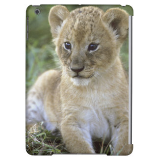 African lion, Panthera leo), Tanzania, Cover For iPad Air
