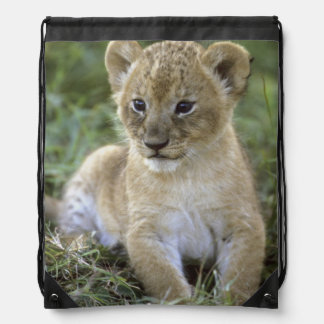 African lion, Panthera leo), Tanzania, Drawstring Bag