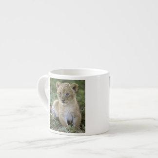 African lion, Panthera leo), Tanzania, Espresso Cup