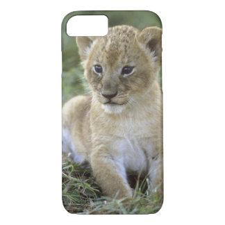 African lion, Panthera leo), Tanzania, iPhone 8/7 Case