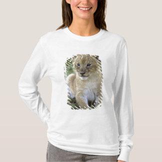 African lion, Panthera leo), Tanzania, T-Shirt