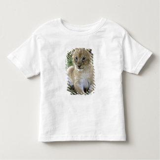 African lion, Panthera leo), Tanzania, Toddler T-shirt